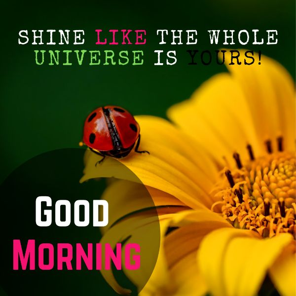 970 Beautiful Good Morning Images Hd For Whatsapp